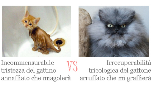 gattini a confronto